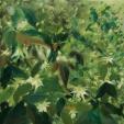 oil/canvas 40 x 40 cm